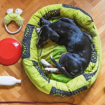 Como Fazer Cama de Cachorro Maravilhosa Costurando uma Manta Velha
